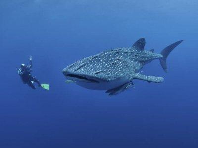 oslob whale watching